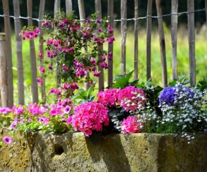Inexpensive Ways to Add Color to Your Garden