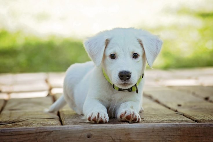 Bringing Home a Rescue Dog: What You Need to Know