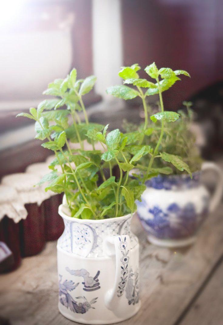 Spice Plants