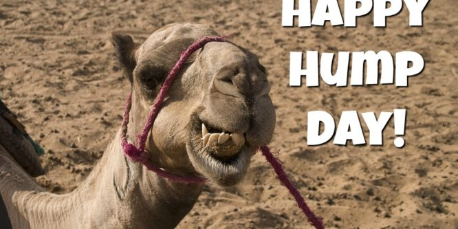 Happy Hump Day Camel Image